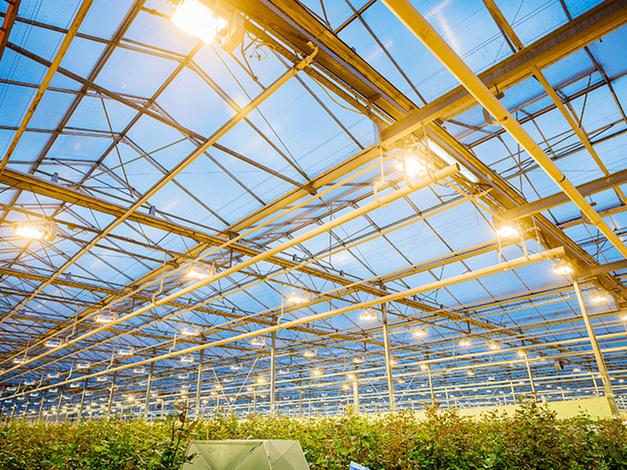 Horticulture LED